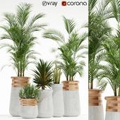 Plants collection 130 indigenus soma