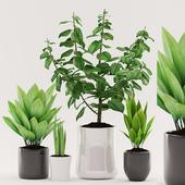 Plants 96