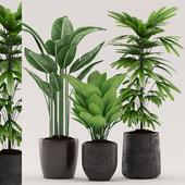 Plants 98