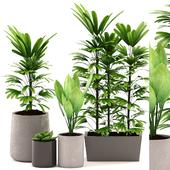 Plants 99