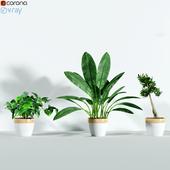Plants_3dce_2