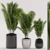 Plants 100