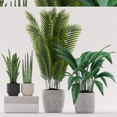 Plants 101