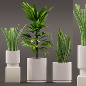 Plants 103