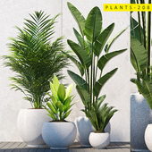 plants 208