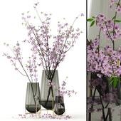 Cherry blossom in Echasse Vases