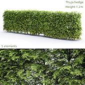 Thuja Hedge # 2 (1.2m)