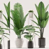 Plants 106