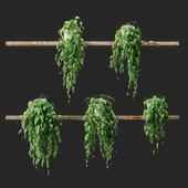 Растения в горшках на полках