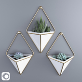 Succulents in hanging pots Umbra trigg