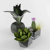 Flower set vol.1
