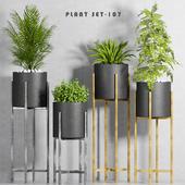 plant set-107