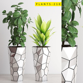PLANTS 210