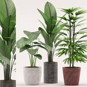 Plants 107