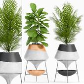 plant set-108