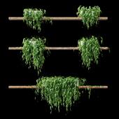 Растения в горшках на полках v2