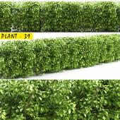 plant 39