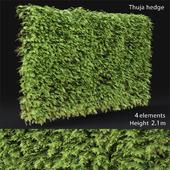 Thuja # 3 hedge (2.1m)