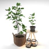Set of plants 02