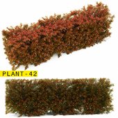 plant 42