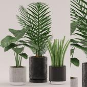 Plants 108