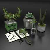 Decorative set with succulents