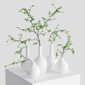Branches in vases