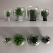 NEBL vases