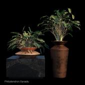 Philodendron Xanadu tropical set