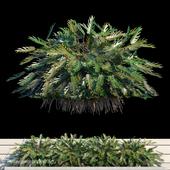 Philodendron Xanadu exterior kit