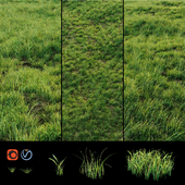 Grass for landscaping exterior