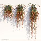 Ivy in pot hanging V1