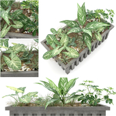JC.Plant_2