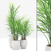 Bamboo Palm exterior set