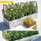 plants 215