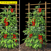 plants 216