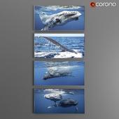 Набор постеров на морскую тему/Posters_SET_Cetacean