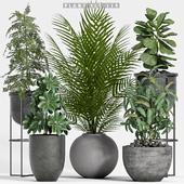 plant set-114