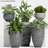 Plant set-115