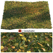 Lawn with dry maple leaves