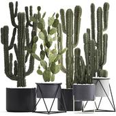 Plant collection 282. Cactus set.