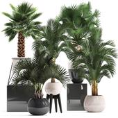 Plant collection 283. Palms set.