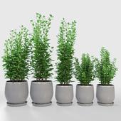Kitchen Plant - Campana Gray Planters