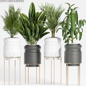 plant set-117