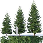 Spruce # 3. Three sizes H4,3-6,5m. Modular branches