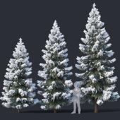 Spruce # 4 Three sizes H4,3-6,5m. Modular branches
