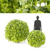 Пузыреплодник калинолистный Лютеус 2 куста| Physocarpus opulifolius Luteus sphere