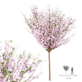Миндаль трёхлопастный дерево | Prunus triloba tree