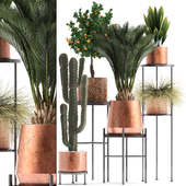 Plant collection 288. copper pot