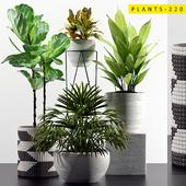 PLANTS 220